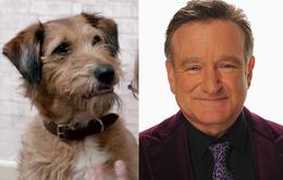 Cầu được ước thấy - Hé lộ vai diễn cuối cùng của Robin Williams
