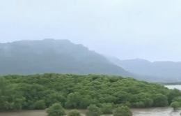 Dự án trồng rừng ngập mặn Việt Nam được chuyên gia quốc tế đánh giá cao