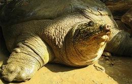 Truyền hình Áo làm phim về bảo tồn rùa Việt Nam