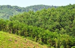 Quảng Nam: Nhiều diện tích rừng trong vùng dễ cháy