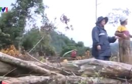 Quảng Ngãi: Rừng phòng hộ Trà Bồng bị tàn phá nặng