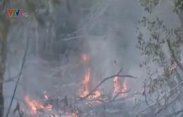 Long An: 6ha rừng tràm bị thiêu rụi
