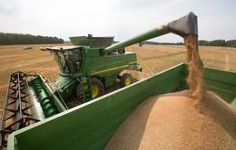 Nga xem xét cấm hoàn toàn xuất khẩu ngũ cốc