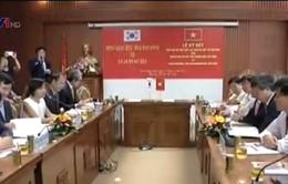 Quảng Nam hợp tác trồng sâm với Hàn Quốc
