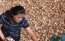 Tạm dừng áp thuế xuất khẩu sắn lát 5%