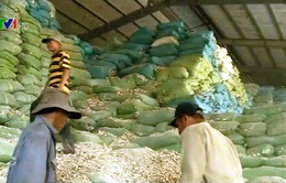 DN xuất khẩu sắn lát gặp khó do áp dụng mức thuế mới