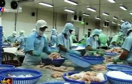 Quy định mới về xuất khẩu cá da trơn vẫn rất mới với DN Việt