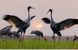 Ngày hội du lịch tại Vườn Quốc gia Tràm Chim