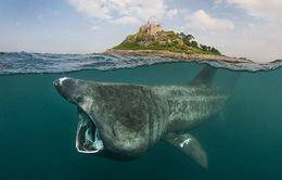 Số sinh vật biển giảm một nửa trong vòng hơn 40 năm
