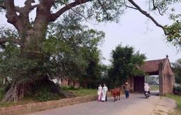Xây dựng làng cổ Đường Lâm thành di tích cấp Quốc gia đặc biệt
