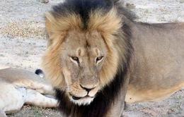 Mỹ: Người dân phẫn nộ với kẻ sát hại sư tử Cecil