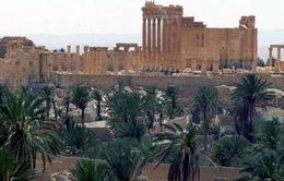 Syria phản công IS tại thành phố Palmyra