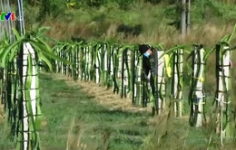 Khu bảo tồn thiên nhiên Tà Cú, Bình Thuận bị xâm hại