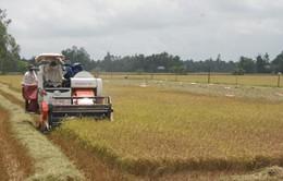 Doanh nghiệp cùng nông dân phát triển vùng sản xuất quy mô lớn
