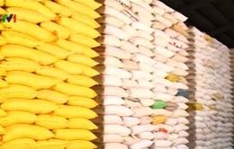 Thanh tra việc tạm trữ lúa gạo ĐBSCL