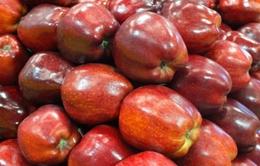 Khẩn trương rà soát táo Mỹ nhiễm khuẩn nhập về Việt Nam
