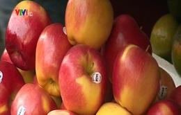 """""""Loạn"""" xuất xứ các loại táo trên thị trường"""