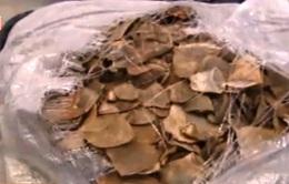 Trung Quốc: Bắt vụ vận chuyển 249kg vẩy tê tê