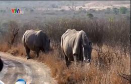 Việt Nam cùng thế giới chung tay bảo vệ tê giác châu Phi