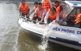TP.HCM: Thả gần 500.000 con cá xuống kênh Tàu Hủ - Bến Nghé