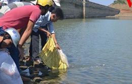 Thả cá tái tạo nguồn lợi thủy sản đảo Lý Sơn