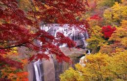 Ibaraki - Vẻ đẹp quyến rũ của đất nước Nhật Bản (P2)