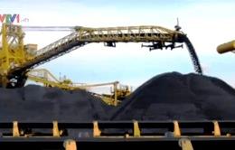 Không xuất khẩu than cám từ năm 2015