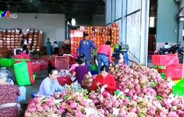 Siêu thị hỗ trợ tiêu thụ thanh long ở Bình Thuận