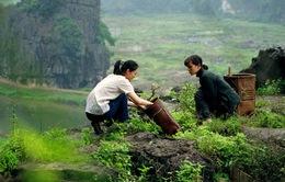 Những bối cảnh đẹp Việt Nam xuất hiện trên phim