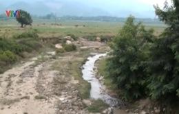Quảng Nam: Hàng nghìn hộ dân khốn khổ vì thiếu nước sạch