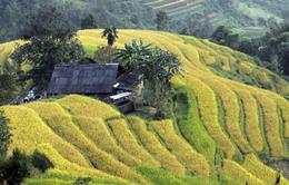 Hôm nay (24/9), bắt đầu Tuần Văn hóa du lịch Ruộng bậc thang Hoàng Su Phì