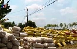 Chậm thu mua gạo tạm trữ: Vì sao chậm?