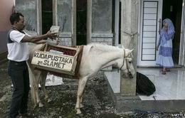 Thư viện miễn phí trên lưng ngựa