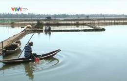 TT-Huế: Tích cực phòng bệnh thủy sản trong mùa nắng nóng