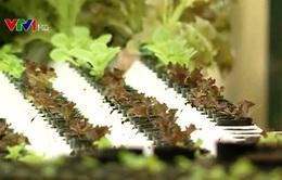 Trồng rau thủy canh - Hướng mở cho vùng rau lớn nhất nước
