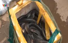 Hà Nội: Thu giữ 2 tấn thủy sản nhập lậu