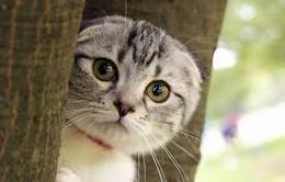 Hà Nội: Tiêu hủy gần 3 tấn mèo không kiểm dịch
