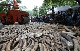 UAE thống nhất tiêu hủy 10 tấn ngà voi
