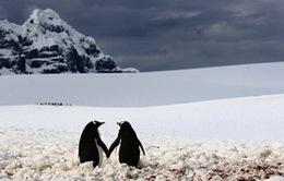 Chùm ảnh đẹp về tình yêu của các loài vật