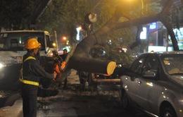TP.HCM: Cây lớn bật gốc, đè bẹp 2 xe ô tô đang dừng đèn đỏ