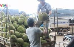 TP.HCM: Trái cây rớt giá, nông dân lo lắng