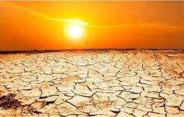 Trái đất nóng lên đe dọa an ninh lương thực