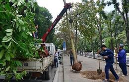 Hà Nội thanh tra toàn diện việc thực hiện thay thế cây xanh