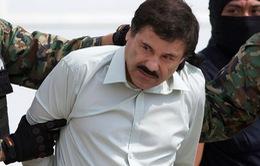 Trùm ma túy Guzman vượt ngục tại Mexico