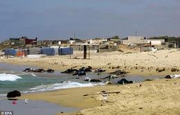 Phát hiện thêm 10 thi thể vụ chìm tàu chở người di cư ngoài khơi Libya