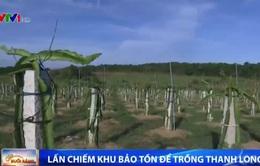 Nông dân Bình Thuận ngang nhiên lấn chiếm khu bảo tồn để trồng thanh long