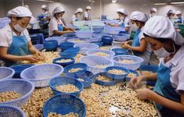 Xuất khẩu ngành điều đạt kỷ lục 2,4 tỷ USD