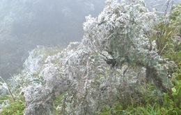 Băng đóng dày trên nền nhiệt 1,4 độ C tại huyện Sa Pa