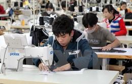 TP.HCM: 700 doanh nghiệp hoạt động trở lại sau Tết