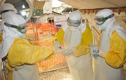 Số bệnh nhân tử vong do virus Ebola vượt quá 11.000 người